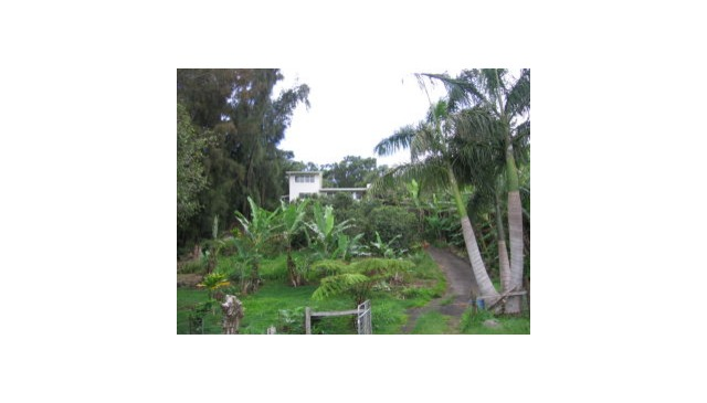 Secluded country home with sweeping view of ocean, Maui. Set in half acre coffee orchard.
